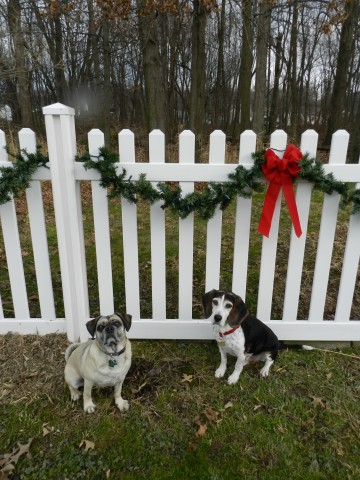 Vinyl fence with dogs